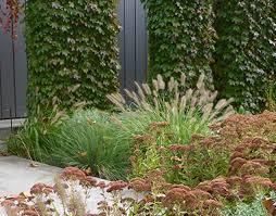 Small Picture Renata Fairhall Garden Designs Gardens Drought tolerant garden