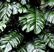 Experten Tipps Zehn Zimmerpflanzen Die Herrlich Anspruchslos Sind