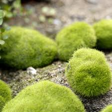 Small Picture Online Buy Wholesale artificial grass decoration crafts from China