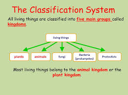 Plant Kingdom Classification Chart For Kids Classification Lesson Objective To Understand How Organisms