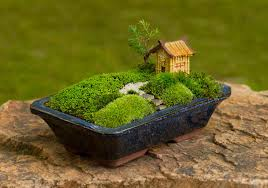 How to Grow Moss For Your Mini Garden At Home | Mansi Rana | Pulse ...