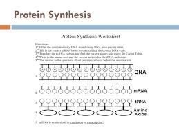 Unit 8 Molecular Genetics and Biotechnology Main Idea DNA codes ...