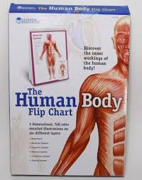 Anatomy Flip Charts Learning Resources Human Body Flip Chart 3d Anatomy Education Book Oop Systems