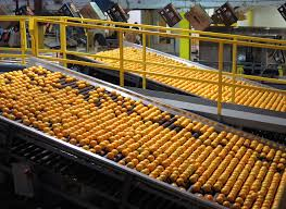 hamlin oranges are washed graded and packed for shipment at the dundee citrus growers ociation ng house in lake hamilton florida