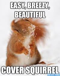 Animal Memes on Pinterest | Funny Animal Pictures, Funny Captions ... via Relatably.com