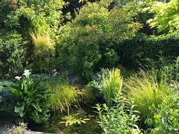 lush planting around the pond