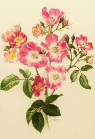 Vintage Floral Print 11 Best Vintage Flowers Botanical Prints By Pierre Joseph Redoutc