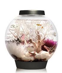biorb aquarium kit with light fixture office desk aquarium