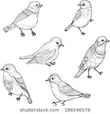 pictures of birds for drawing. Contemporary Birds Set Of Line Drawings Birds Ink Drawing Hand Drawn Vector Illustration With Pictures Of Birds For Drawing