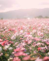 28+] Aesthetic Flowers Wallpapers on ...
