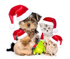 With over 300 breeds on our site, we've got gifts pawfect for any dog or dog lover! Merry Christmas Dogs Animals Background Wallpapers On Desktop Nexus Image 2289480