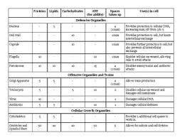 Cell Organelle Chart Answer Key Bedowntowndaytona Com
