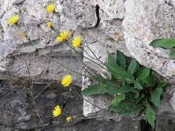 Prioritätensetzung im botanischen Artenschutz - LfU Bayern