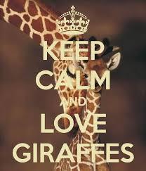 1000+ ideas about Giraffes on Pinterest   Baby Giraffes, A Giraffe ...