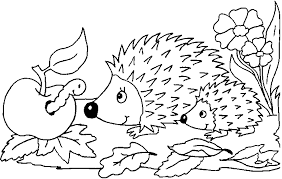 Small Picture Hedgehog Coloring Page GetColoringPagescom