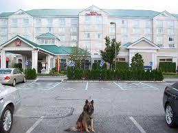 garden inn suites new york. Hilton Garden Inn New York/Staten Island: My Dog Vinnie In Front Of Hotel Suites York