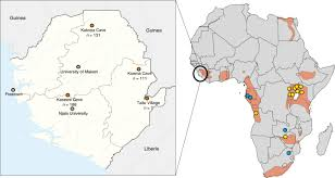 The same studies described similar results regarding npc1's role in virus entry for marburg virus, a related filovirus. Isolation Of Angola Like Marburg Virus From Egyptian Rousette Bats From West Africa Nature Communications