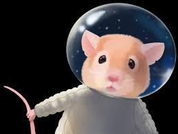 NASA launches 20 mice to space station as part of its twin study