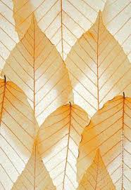 Small Picture Modern Wallpapers with Leaves Beautiful Eco Style Decor