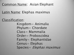 34 Credible Elephant Taxonomy Chart