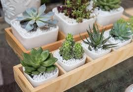 Luxury Christmas Cat Plant Gift Set  Grasses Plants And GiftChristmas Gift Plants