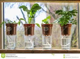 Dochtbewässerung Anlagen In Den Töpfen Auf Gläsern Stehen Auf Einem
