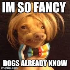 phteven dog Meme Generator - Imgflip via Relatably.com