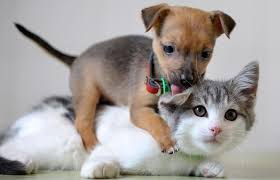 Image result for Dogs and cats sights