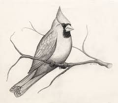 Image result for birds drawing