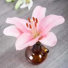 lily pink dutch holland flowerwiki holex flower
