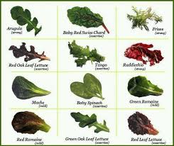 Lettuce Types Chart Lettuce Types Chart Lettuce Varieties In 2019 Types Of