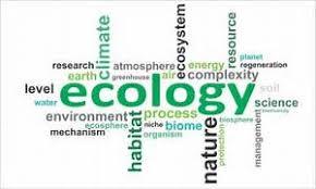 ecology essay ecology
