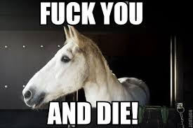 dikke paarden
