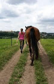 Die Besten Pferdesprüche Das Pferd Dein Freund Wattpad
