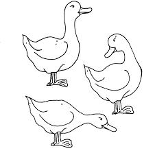 Dessin De Coloriage Canard Imprimer Cp05702