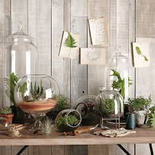 Weather you decide to make your own terrarium or buy one they help add a  nice decorative touch to your home. West Elm has a great selection of glass  ...