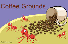 home remes to get rid of ants coffee grounds
