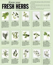 Fresh Herbs Chart W Pics In 2019 Fresh Herbs Thyme Plant