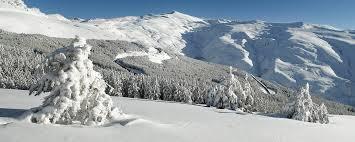 Image result for sierra nevada