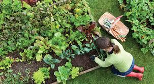 Small Picture Garden Design Courses Garden Design Course Diploma Home Study