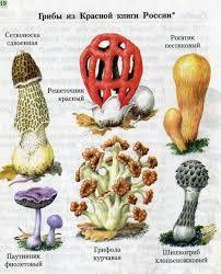 Урок окружающего мира в м классе по теме В царстве грибов   Рисунок 2