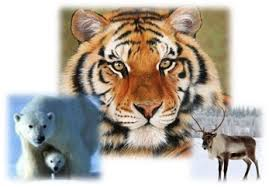 Редкие виды животных интернет проект ru красная книга россии