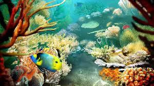 tropical aquarium wallpaper. Delighful Aquarium Screensaver Windows Desktopcustomization Intended Tropical Aquarium Wallpaper R