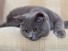 Kat spint niet