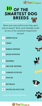 10 Of The Smartest Dog Breeds Is Your Dog On The List Dog