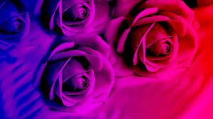 Purple Flower Wallpaper For Bedroom Purple Rose Bedroom Wallpaper Best Bedroom Ideas 2017