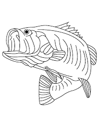 bass fish coloring pages. Interesting Coloring Sea Predator Striped Bass Fish Coloring Pages Throughout M