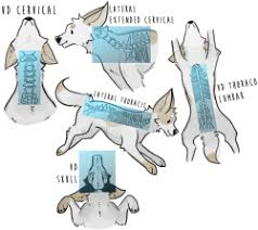 Veterinary Radiology Positioning Chart Radiography Tumblr