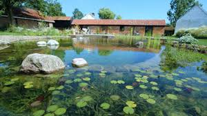 Small Picture Adorable 90 Pond Garden Design Design Ideas Of Garden Pond Design