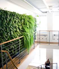interior design large size amazing green wall in fornt of the stores with various plants amazing office plants